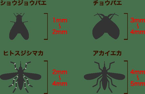 虫の特徴図解