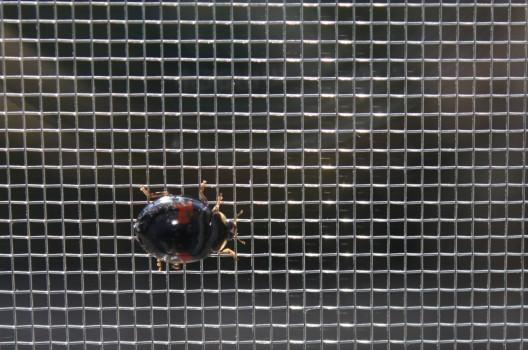 網戸の隙間から虫が!隙間をふさぐ対処法から張り替えの方法まで解説