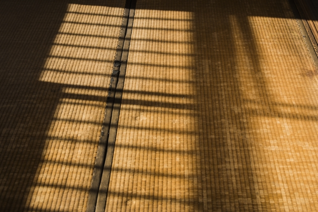 畳に発生するカビの種類