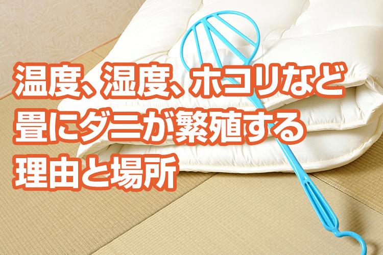 畳ダニの対策方法