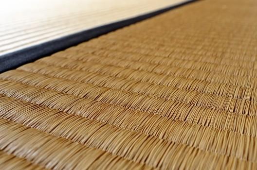 畳の湿気に要注意!ダニやカビが繁殖する条件と予防法&対処法